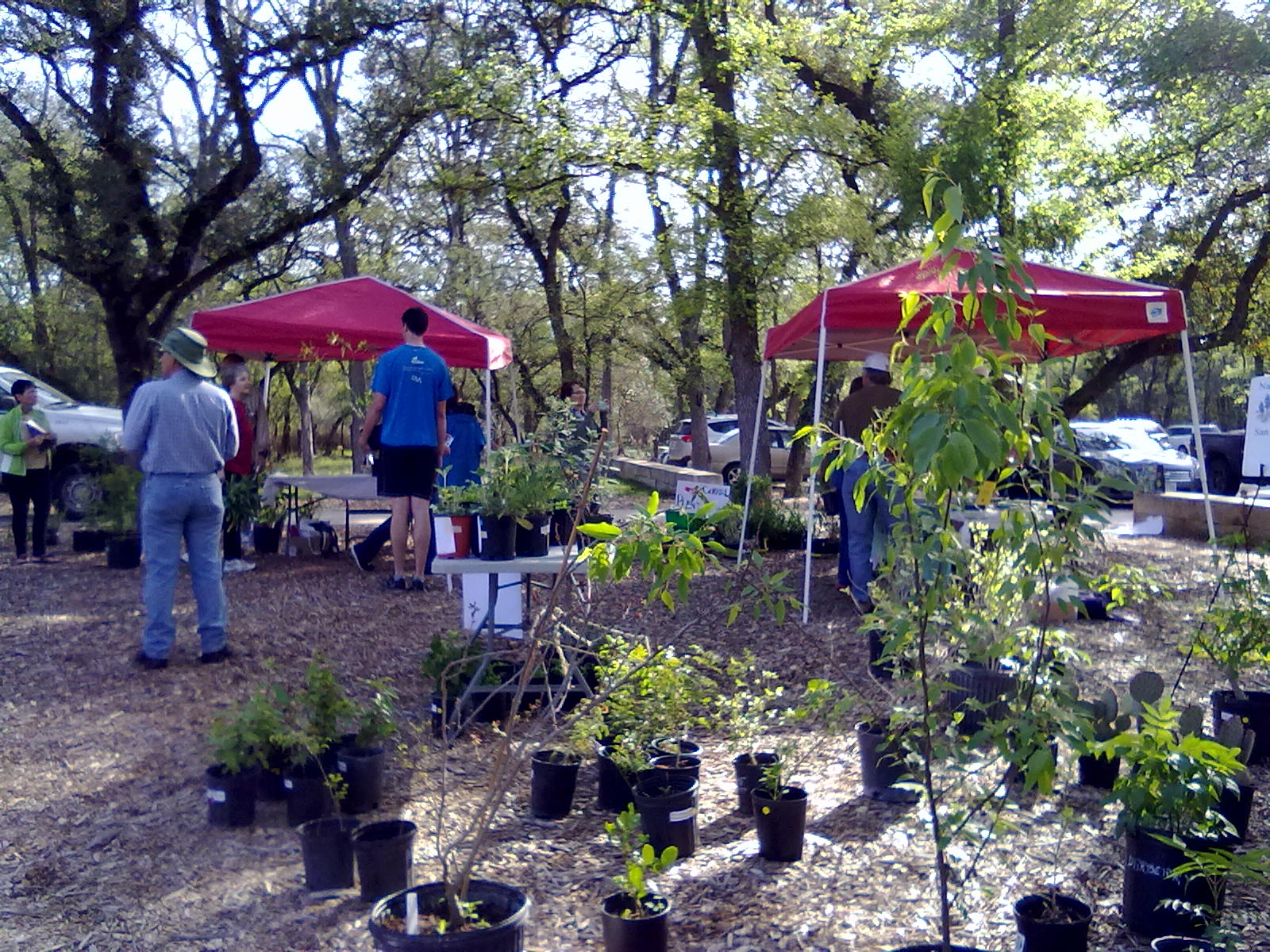 Spring Gardening Events In San Antonio!
