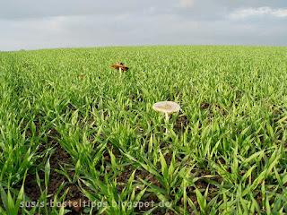 Pilze auf einem Feld, Foto von unabh. Stampin' up! Demonstratorin in Coburg