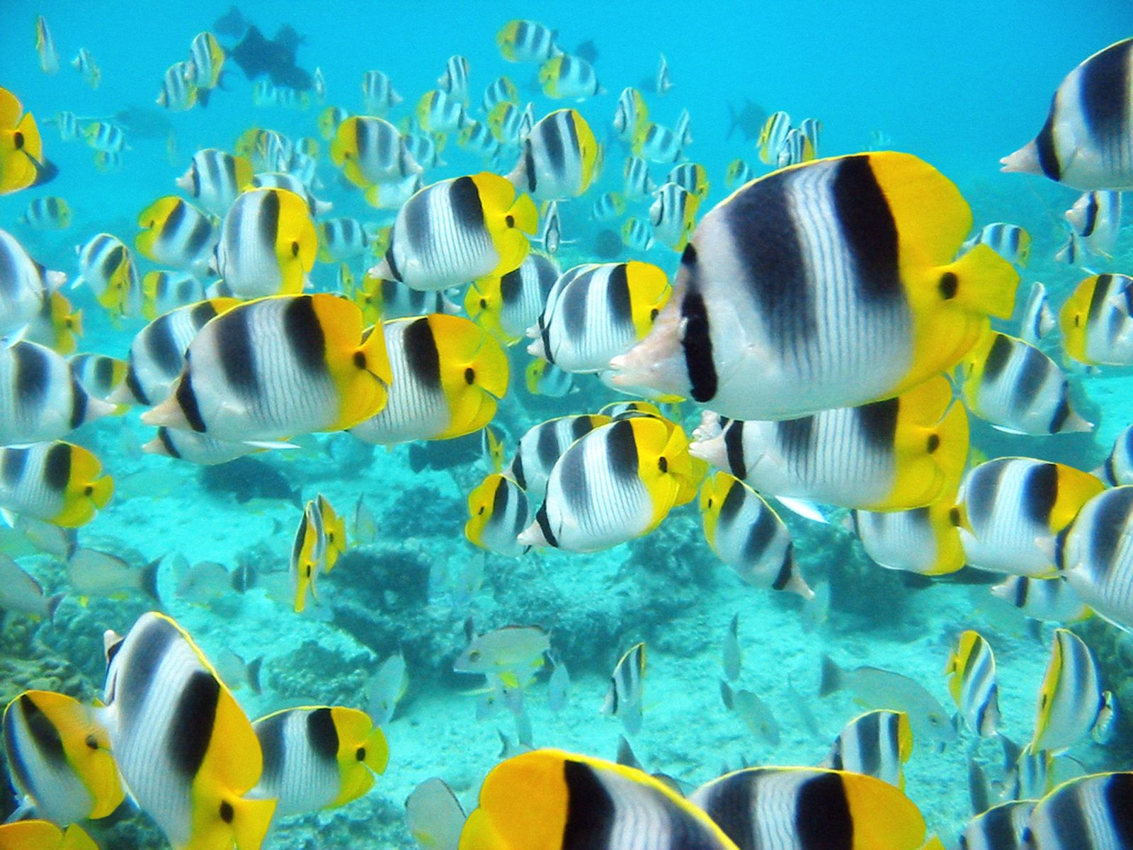 Alayx Wallpaper Tropical Fish Wallpapers