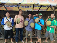 Lapak Durian Bang Iwan, Warga: Dagingnya Tebel Harga Hemat Untuk Anak Kost, Buruan Coba!