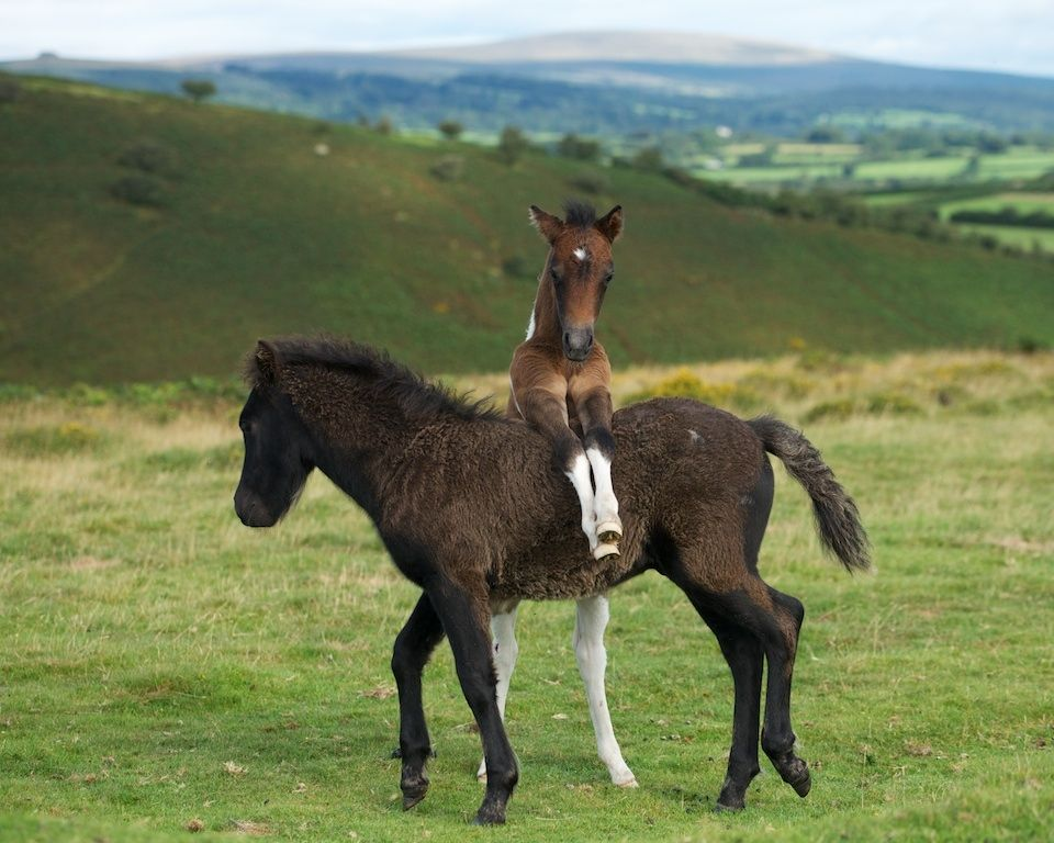 foals - photo #3