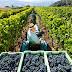 El Gobierno central apruebas una serie de medidas extraordinarias para viticultores y bodegueros