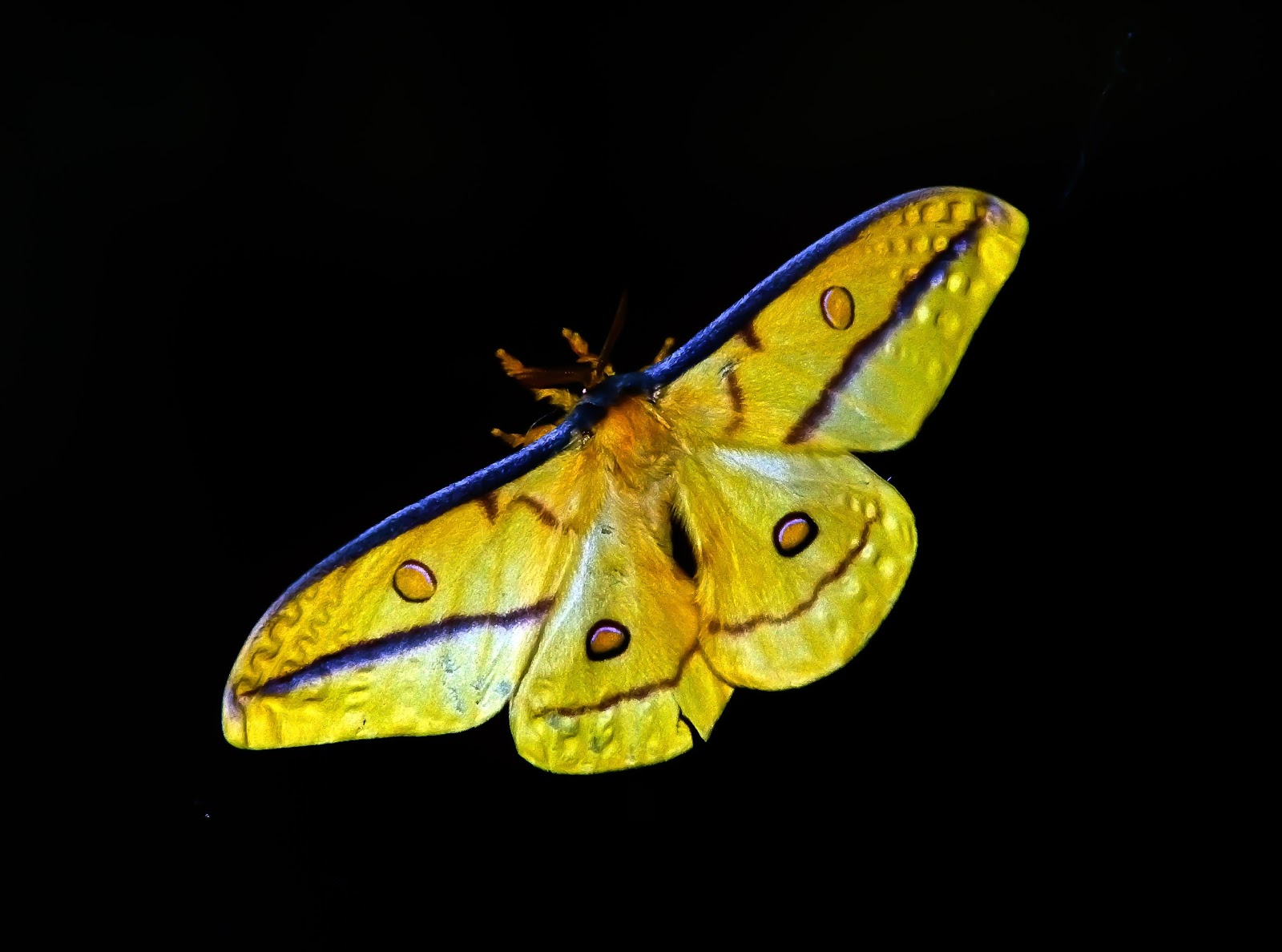 yellow-and-blue-butterfly-images