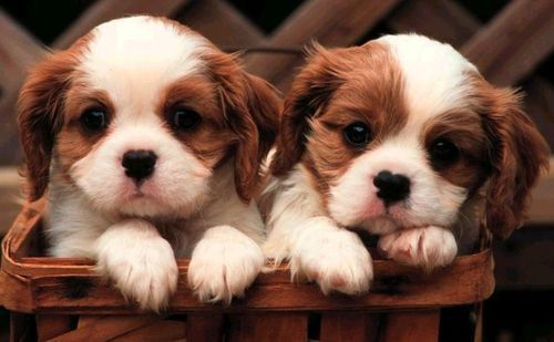 50 Cute Puppies I Adore (With images) | Cute animals, Cute ...  |Cute Baby Dog Pictures