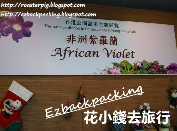 香港公園非洲紫羅蘭展覽