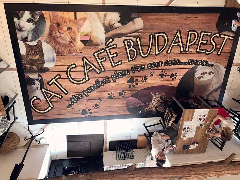 Cat Café Budapest, Hungary