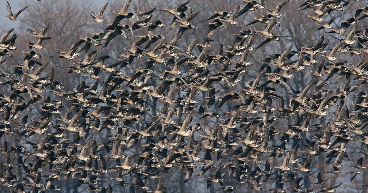 Probirder: Productive winter birding