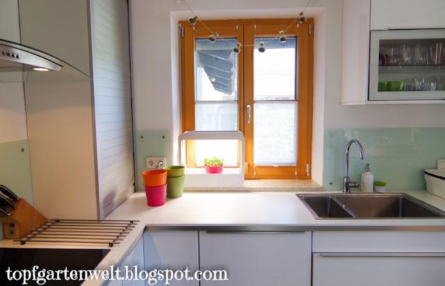 Küchenkräuter drinnen anpflanzen - Gartenblog Topfgartenwelt