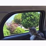 Kedi İle Yolculuk