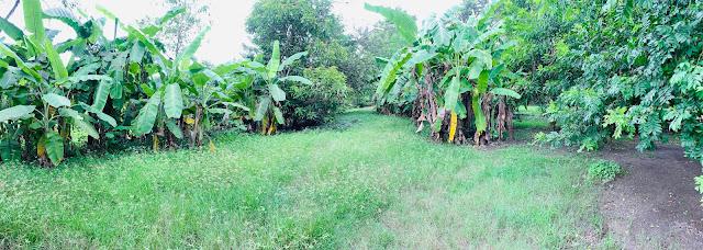 farm for sale tarlac philippines