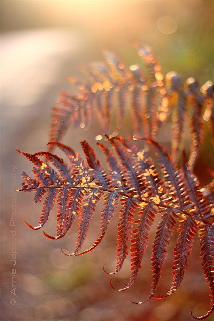 fern, nature photography