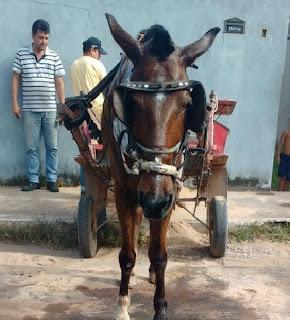 Homem é preso acusado de maus tratos a um cavalo em Imperatriz