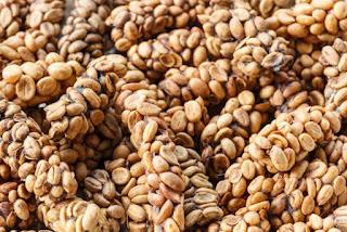 cara membedakan kopi luwak asli dan palsu