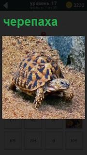 По земле тихо ползет обыкновенная черепаха на краю обрыва высоко подняв свою голову
