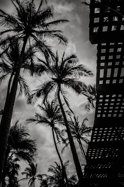 palm trees at puerto vallarta wedding venue