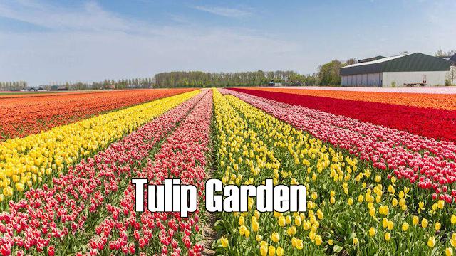 Indira Gandhi Memorial Tulip Garden Current Affairs 2021