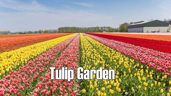Indira Gandhi Memorial Tulip Garden Current Affairs 2021