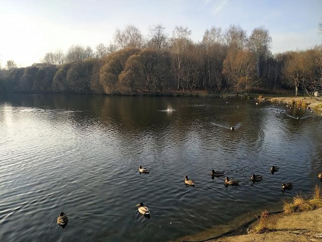 Измайловский парк. Совхозный пруд.
