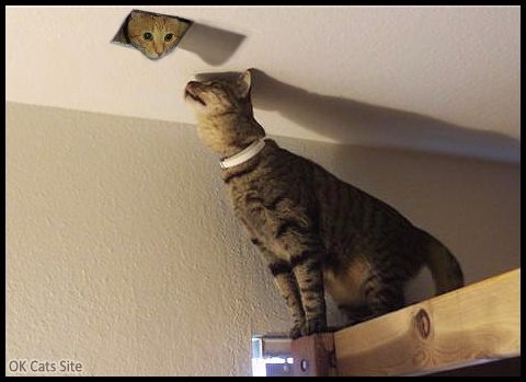 Photoshopped Cat picture • Finally Mama cat found her kitten hidden in the ceiling [ok-cats-site.com]
