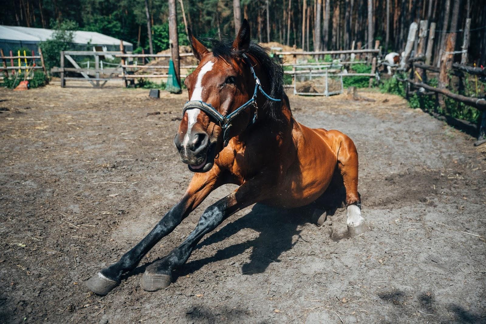 مرض التيتانوس في الخيول tetanus