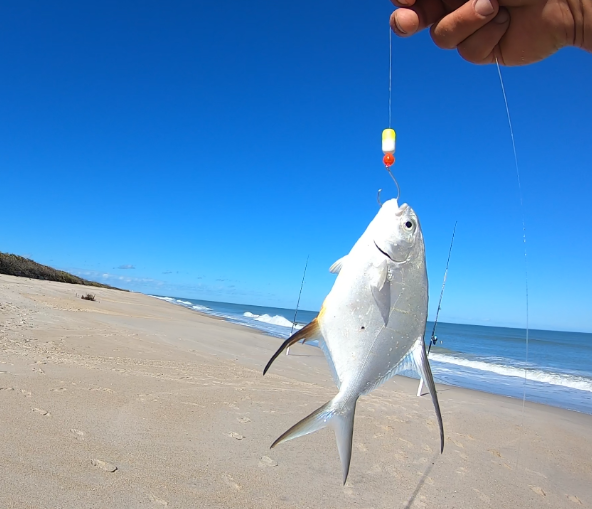 Anglers, East Coast, Fish Reports, Fishing, Fishing Reports, Florida Fishing, Florida Surf Fishing, Surf Fishing,