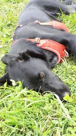eduquer chien annecy talloires ugines thones faverges albertville