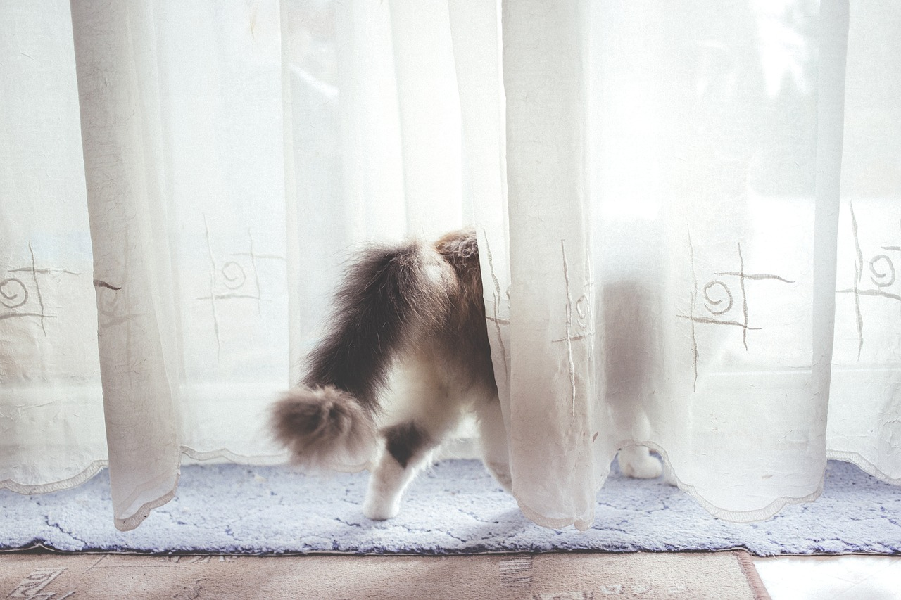 Adoptez un chat: aspects à considérer