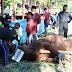 Kapolda Jateng Serahkan 24 Ekor Hewan Kurban