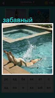 забавная собака прыгает в бассейн с головой в игре 667 слов 4 уровень