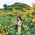 Sắc hoa dã quỳ nhuộm vàng đất trời Đà Lạt