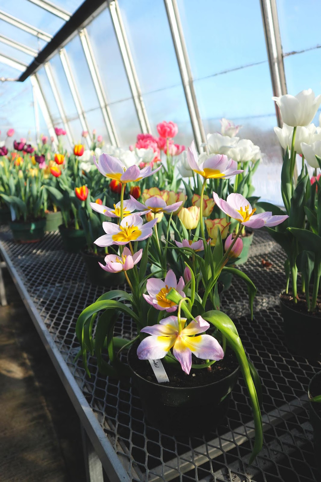 Celebrating Spring at City of Kingston Greenhouse