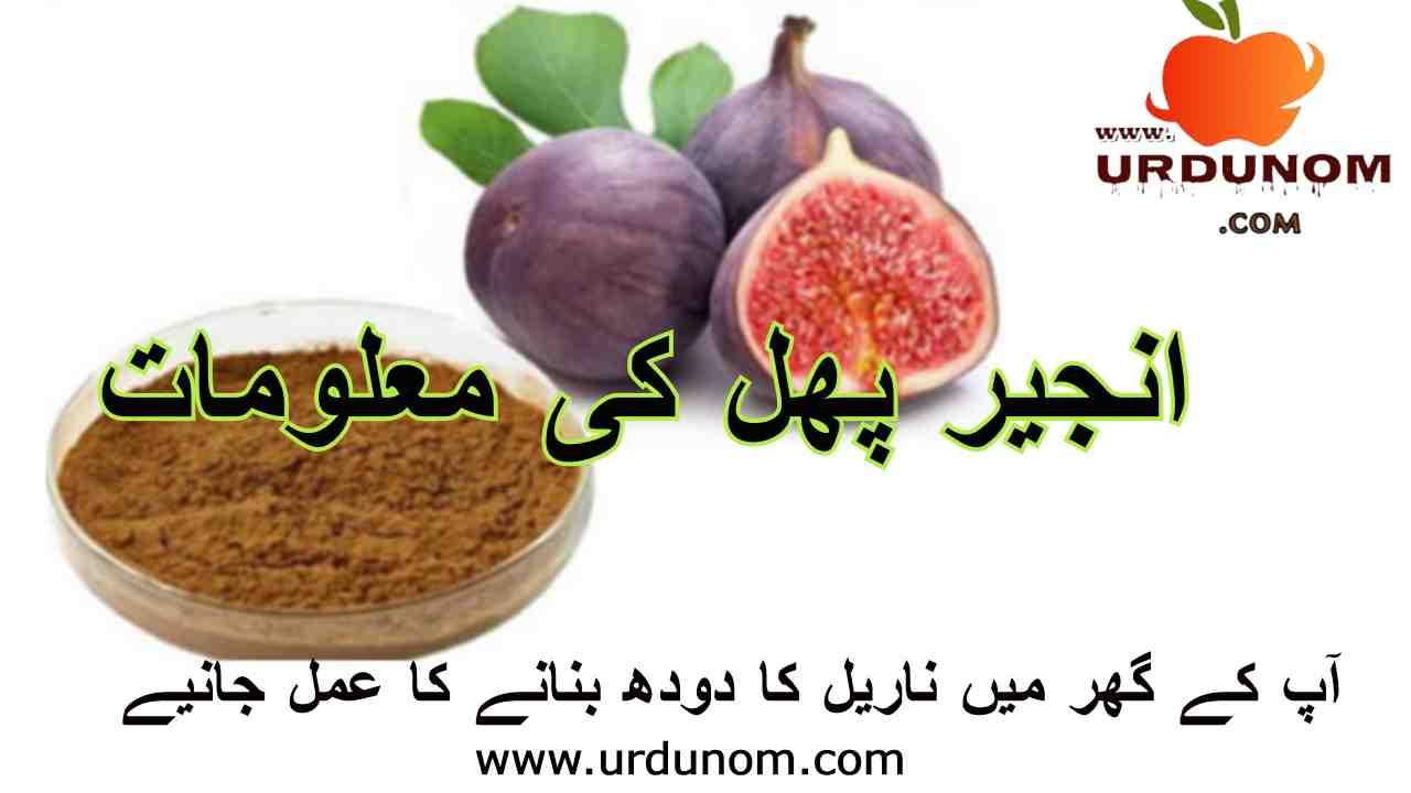 انجیر پھل کی معلومات | Fig fruit information in urdu