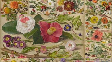 Las flores, frutas y verduras en doce meses de Eliot Hodgkin (The Months)
