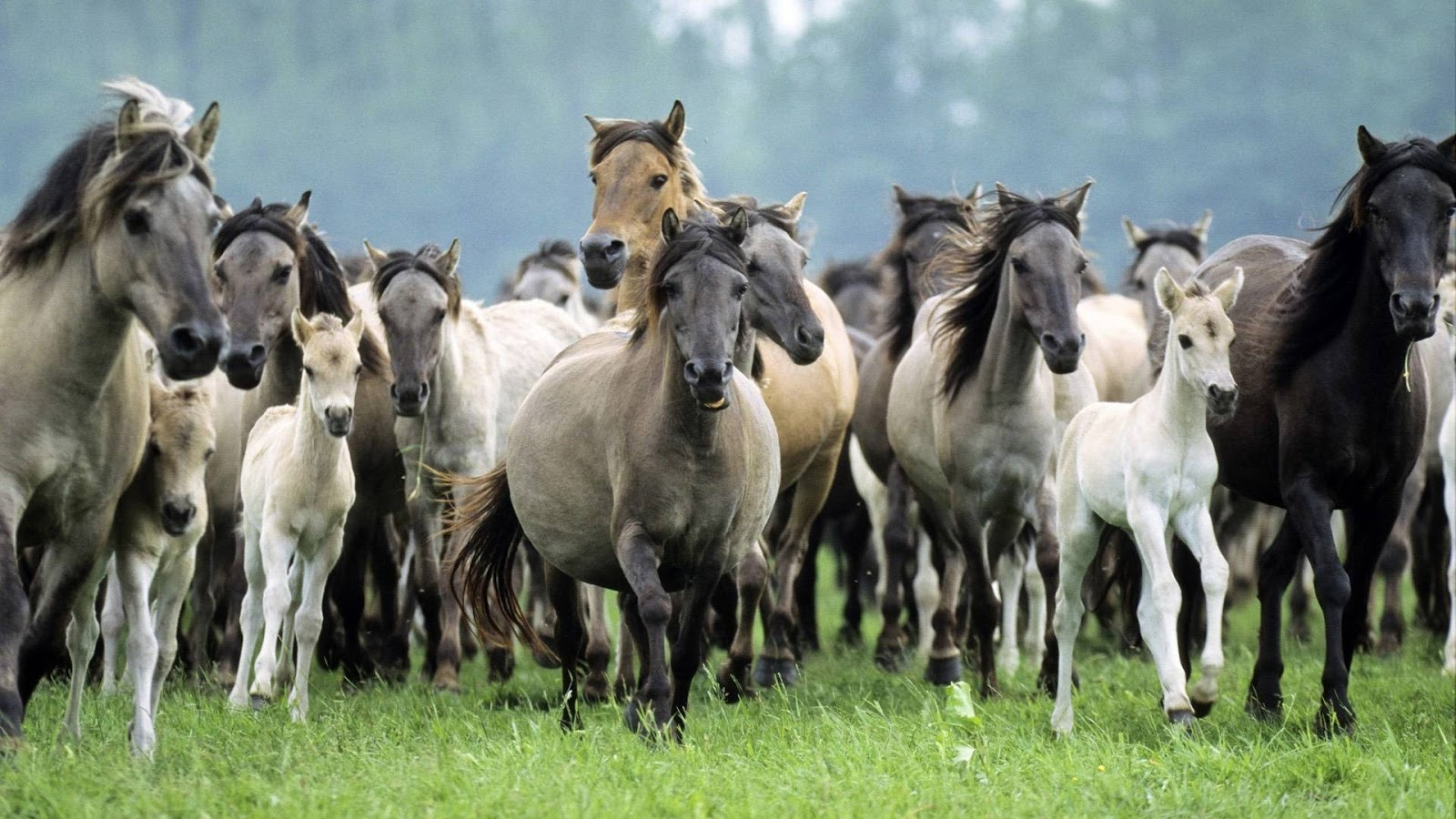 Horse Wallpapers HD  Collection of Running Horses App