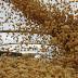 Importação de soja dos EUA pela China aumenta 52,8% em 2020; compra fica abaixo do esperado