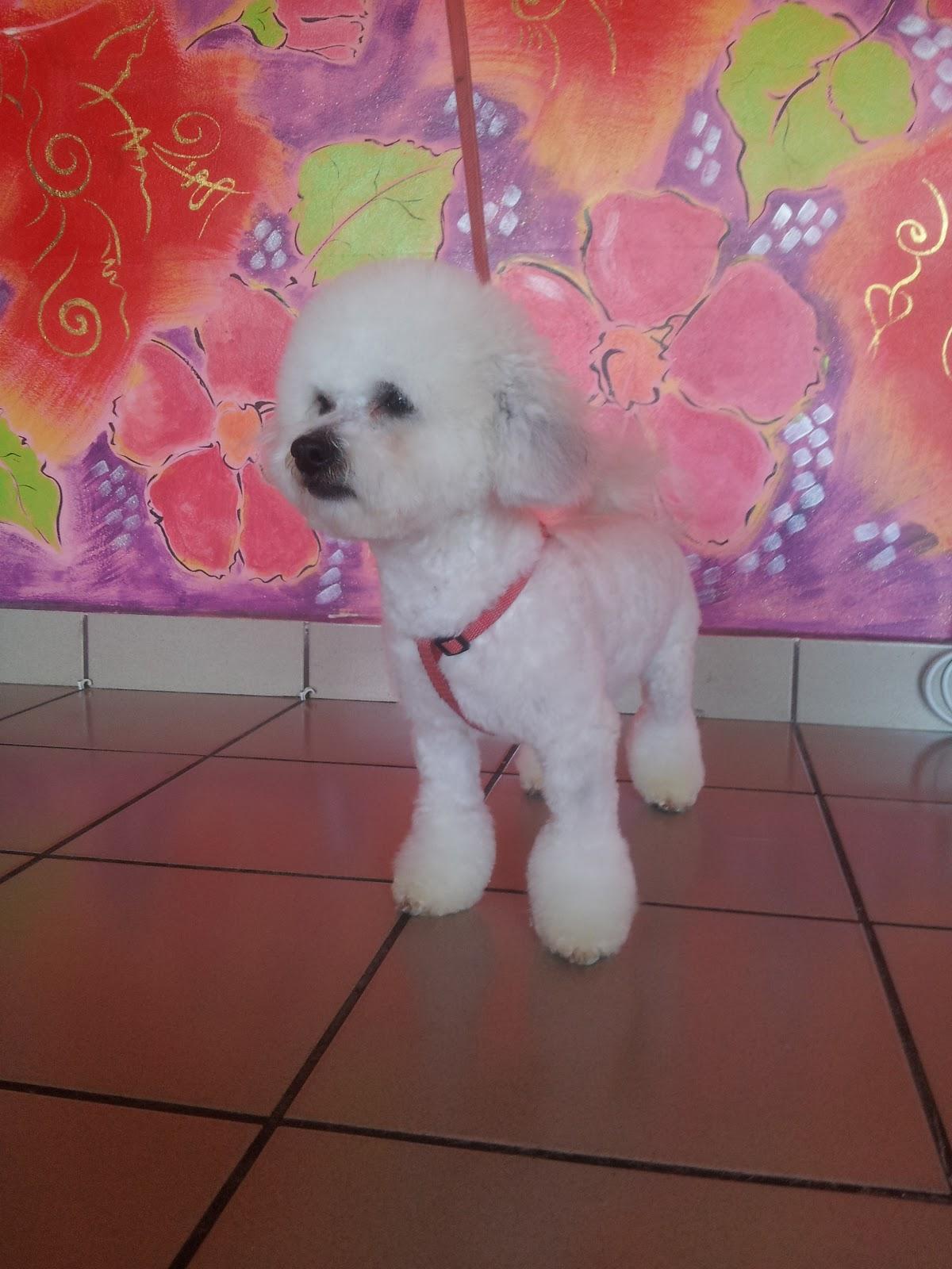 Cosmetica Canina Timisoara Tel 0722670294
