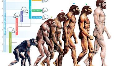 La teoría homínida, un axioma irrevocable