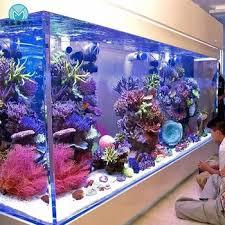 Pompa Kolam Untuk Ikan Koi Yang Hemat Listrik Dan Di Rekomendasikan