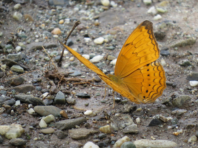 The Butterfly Tour Packages of India