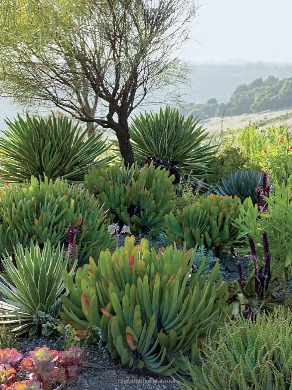Succulents And More Book Review Private Gardens Of The Bay Area