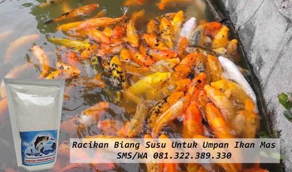 Toko Umpan Master Essen 100 Asli Original Racikan Biang Susu Untuk Umpan Ikan Mas