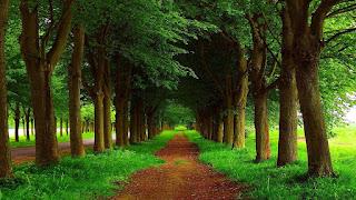 أجمل الأشجار الطبيعية