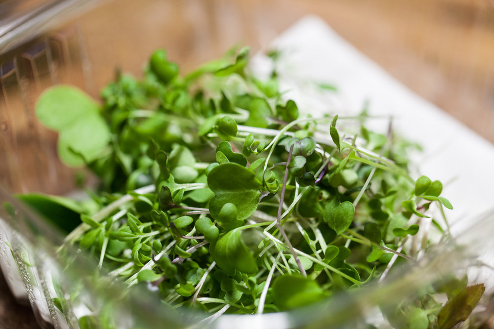 broccoli sprouts , microgreens