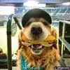 O cara que tirou a melhor foto de cachorro do ano