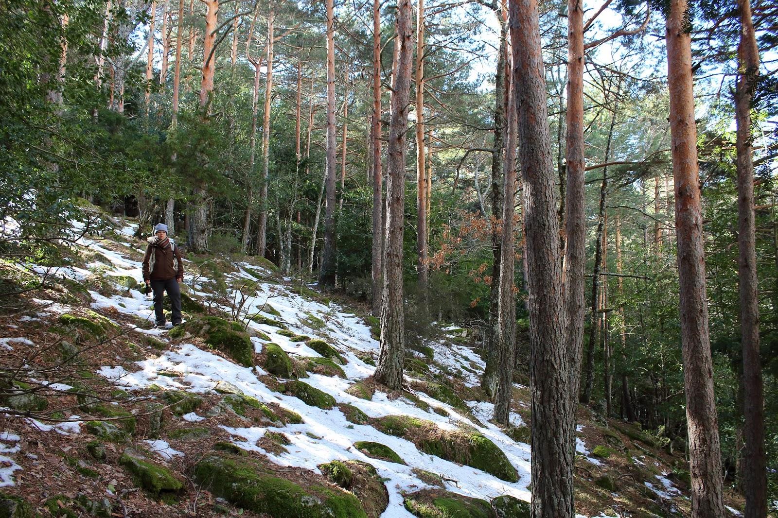 Senda Ecológica de Canencia: Un jardín botánico en la naturaleza