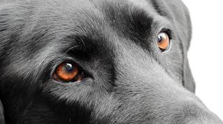 Γιατί τα σκυλιά ζουν λιγότερο από τους ανθρώπους; Η εκπληκτική απάντηση που έδωσε ένα 6χρονο παιδί