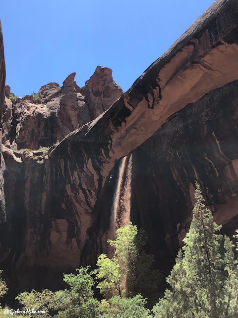 Hiking Grandstaff Canyon to Morning Glory Arch, Dog friendly hikes in moab, hiking in moab with dogs