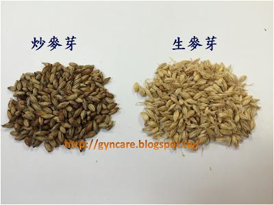 左邊是炒麥芽,右邊有鬚的是生麥芽