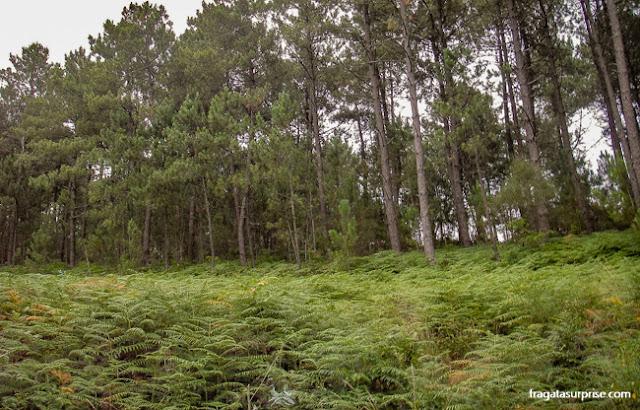 Bosque em Santiaguiño de Antas, Caminho de Santiago