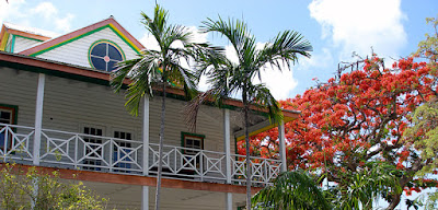 Poinciana tree next to colorful wooden building.